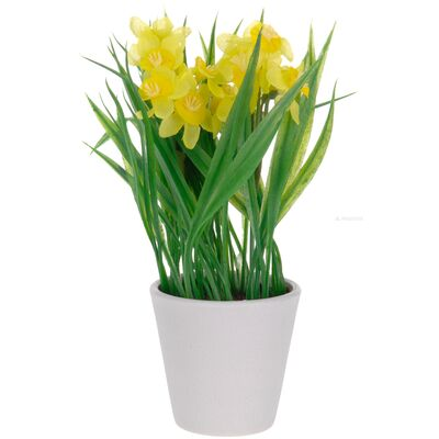 Нарцисс в горшке L50, фото 1